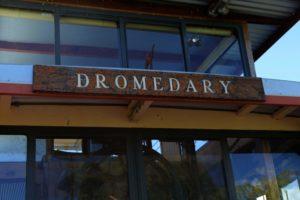 The Dromedary